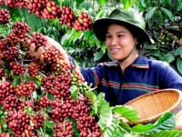 How will Brexit affect farming in Vietnam?