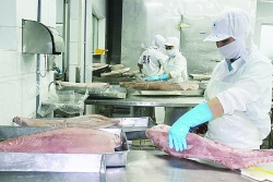 The export of seafood changed because of the Covid-19 pandemic