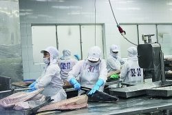 Tuna exports increase spectacularly
