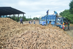 China sharply reduced imports of Vietnamese cassava, increased imports from Thailand