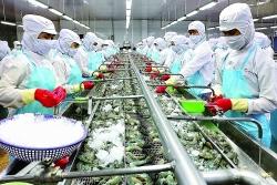 Speeding up shrimp exports to the EU