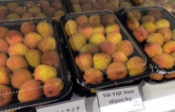 Noi Bai Customs ensures pandemic prevention while facilitating export of fresh lychee