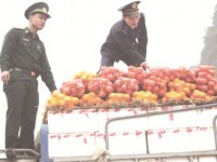 Agricultural products importers have signs of VAT evasion with amounts of dozens of billions of VND