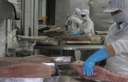 """Seafood exports could lose half a billion USD per year if given a """"red card"""""""