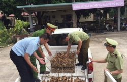 Strengthening prevention of smuggling at great risk of avian influenza infection