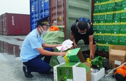 Trade by ports in Hai Phong Customs earns US$58 billion