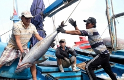 """Stopping violating fishing vessels this year to remove the """"yellow card"""""""