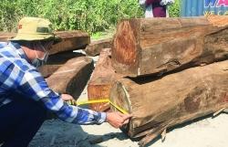 "Pterocarpus erinaceus ""disguised"" as Chinese goods"
