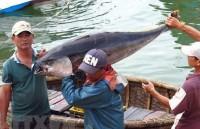 Fishery sector works to remove IUU yellow card warning