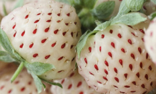 japanese luxury fruit come to vietnam with a high price