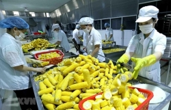 Vietnam needs to invest in processing, packaging of agricultural products: experts