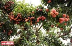 More Vietnamese agro products to be available on e-commerce platforms