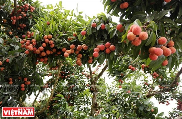 More Vietnamese agro products to be available on e-commerce platforms hinh anh 1