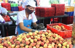 Vietnam sees surge in farm produce exports to China