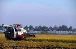 Vietnam holds first national dialogue on food systems
