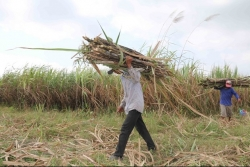 Ministry slaps anti-dumping and anti-subsidy duties on sugar from Thailand