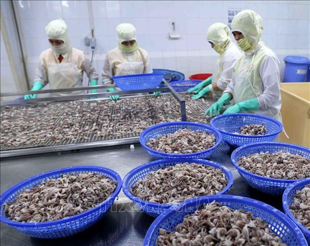 Squid, octopus exports to China remain on the rise hinh anh 1