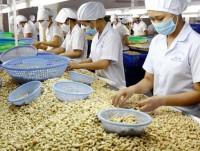 in 2017 cashew industry will reach us 3 billion of export