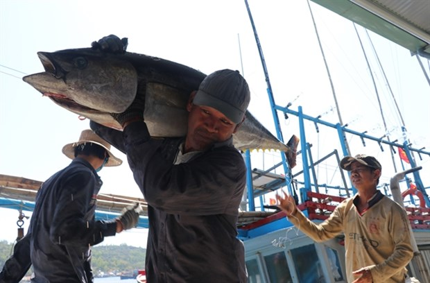 Vietnam becomes largest tuna exporter of Israel hinh anh 1