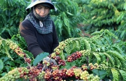 Vietnam seeks to expand export markets for farm produce