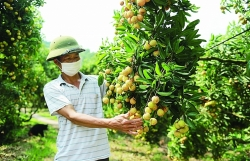 Cooperate to consume agricultural products