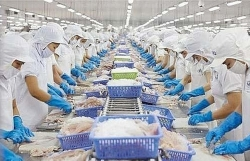 """Exports of squid and octopus to the US increased at a """"galloping"""" speed"""