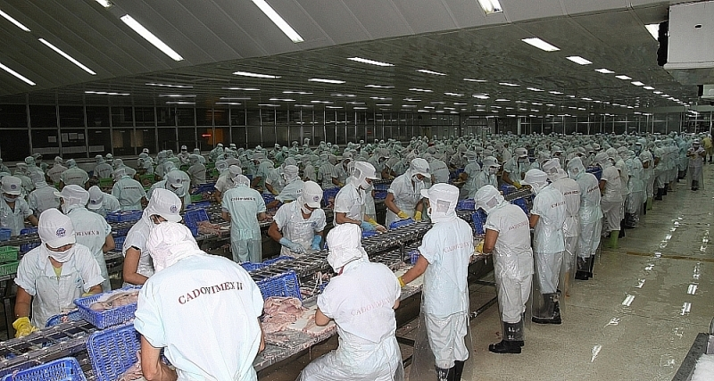 Covid-19 has caused some seafood businesses to have to suspend operations (Photo: CADOVIMEX II)