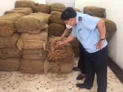 Tra Linh Customs seizes 2.5 tonnes of tobacco materials