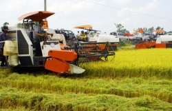 Ministry of Industry and Trade proposes urgent solutions to solve difficulties in rice consumption to the Prime Minister