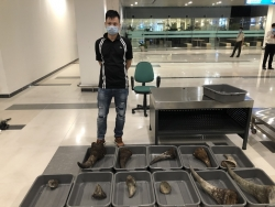 Trial of 14 cases related to rhino horn
