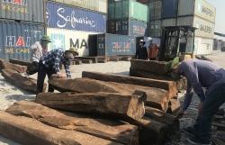 Clarifying the alliance in smuggling of 850m3 of narra padauk wood