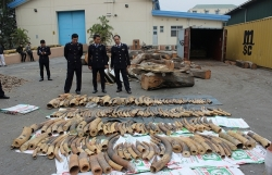 Hai Phong Customs prosecutes 13 cases of criminal violation